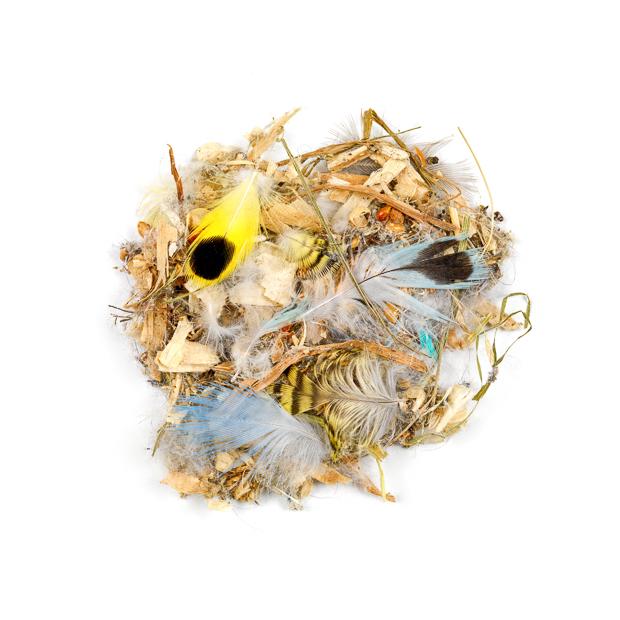Dust # 27: Pet Shop